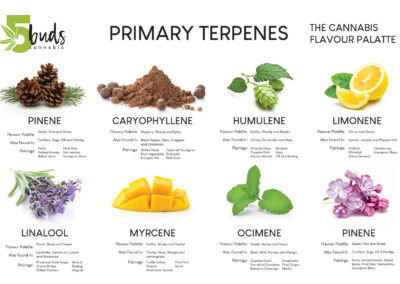 5Buds Cannabis Common Terpenes Chart